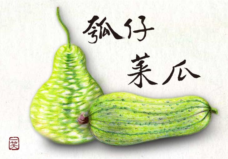 瓠瓜與絲瓜