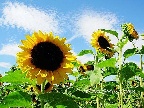 Blumen August 060.jpg