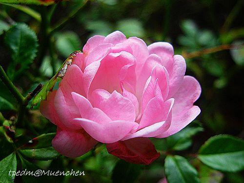 Blumen Aug 25 160.jpg