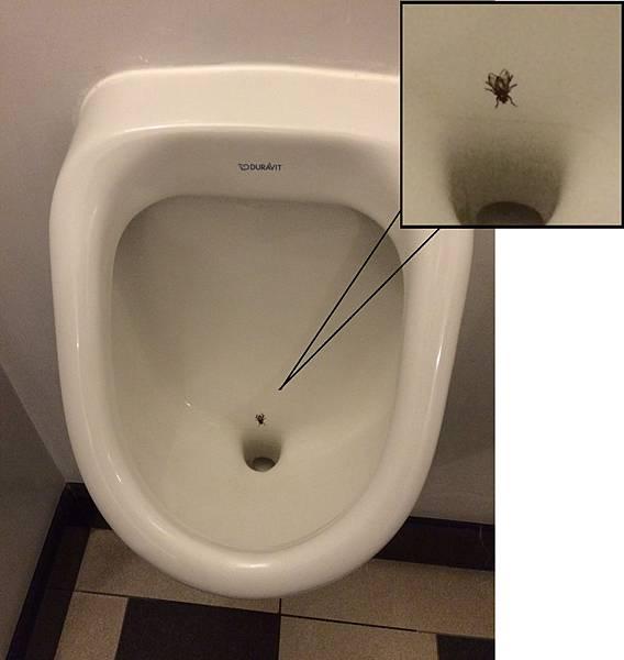 停在佩拉皇宮飯店(Pera Palas)男廁所便池裡的蒼蠅