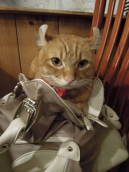 直接蹲在我包包裡的小捲