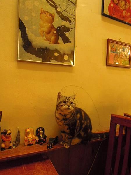本桌坐檯貓3號阿肥