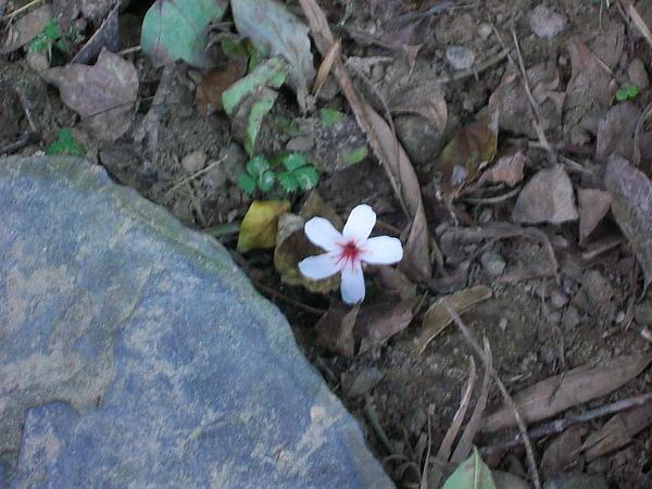 掉落土地之花