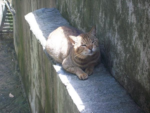 排水孔旁的貓
