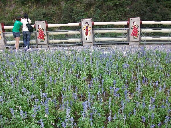 烏來瀑布+lavendar