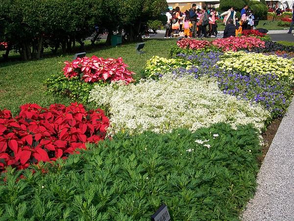 花圃.jpg