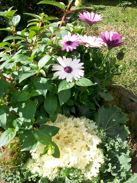 清境國小美麗花朵