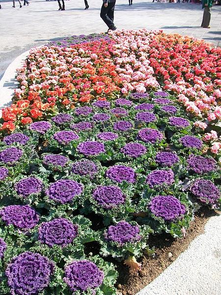 造型花牆及美麗花圃.jpg