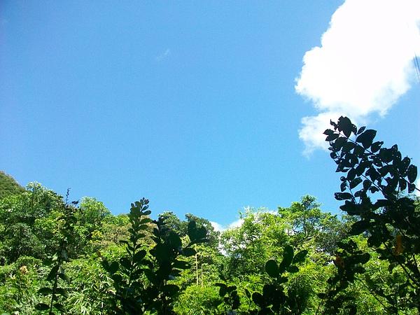 藍+綠之美