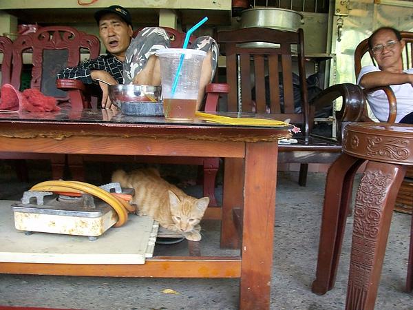 居民2人與貓