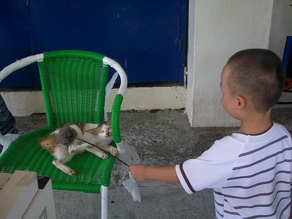 貓迷的小孩也愛貓