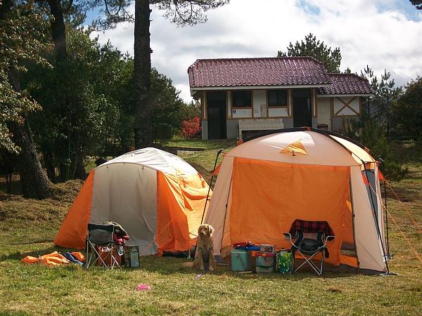 黃金犬來露營