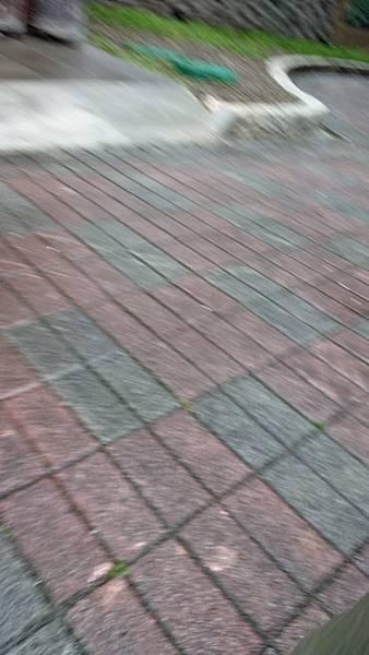 20180204 四平公園環境服務_180211_0010.jpg