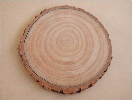 木本植物的橫斷面