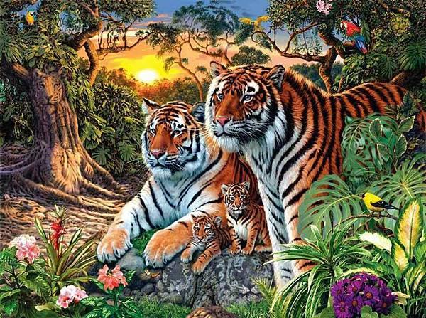 有幾隻老虎呢