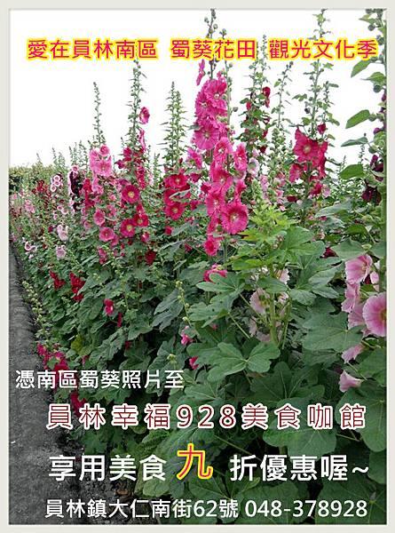 九折 蜀葵