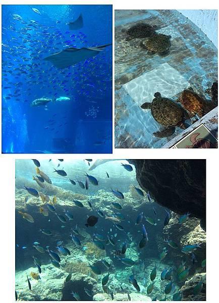 水族館組合圖-3.jpg