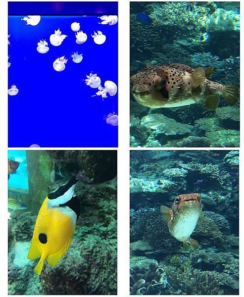 水族館組合圖.jpg
