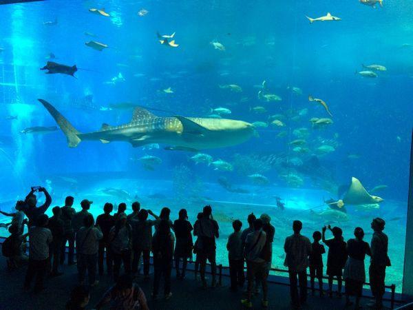 大鯊魚.jpg
