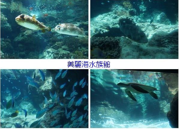 美麗海水族館-4.jpg