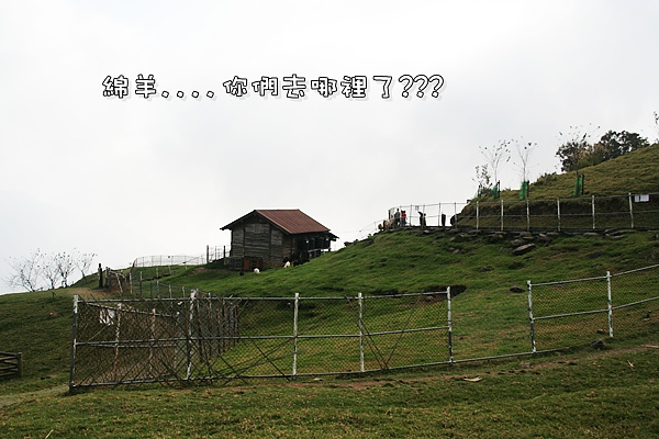 清境合歡山之旅 071.jpg