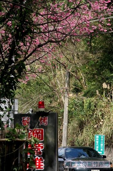 2009-02-08內灣行 027.JPG