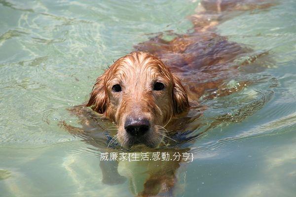 游泳 37.jpg
