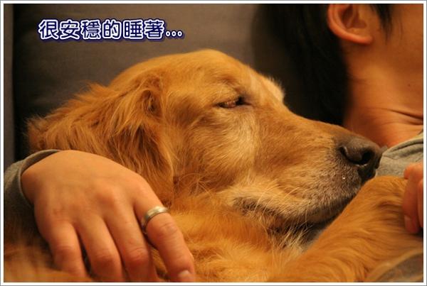 威穩的睡著.JPG