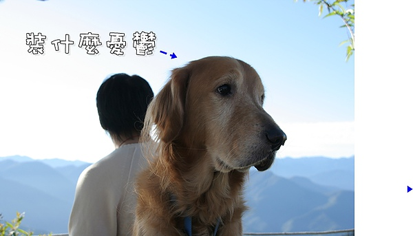 清境合歡山之旅 238.jpg