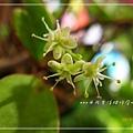 川七_20131030-2