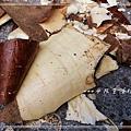樹薯_20131208-3.jpg