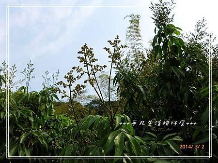 玉荷包疏花