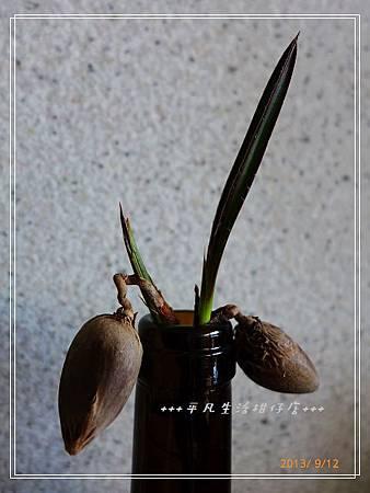 藍棕_20130912-3.jpg
