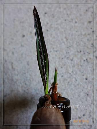 藍棕_20130912-4.jpg
