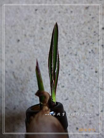 藍棕_20130912-5.jpg