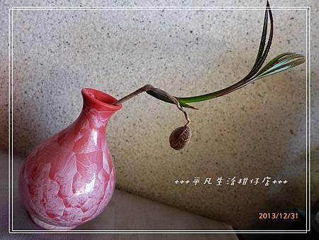 藍棕梠_20131231-4.jpg