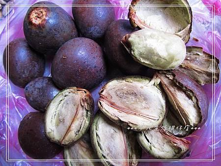 藍棕櫚_20130818-2.jpg