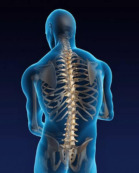 Spine-00.jpeg