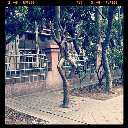 2014-0818 ~連理之木~