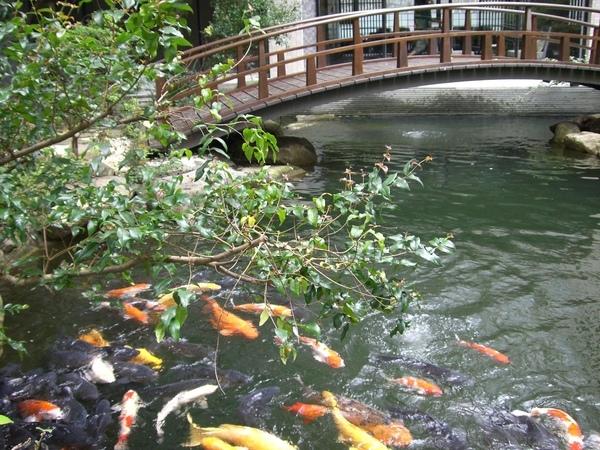 鯉魚和拱橋