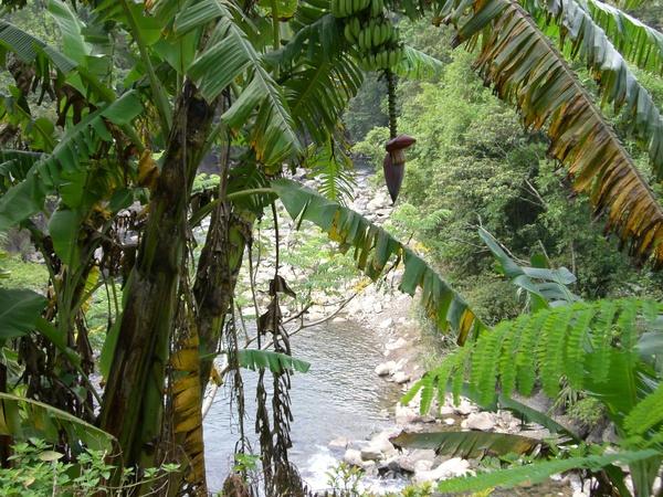 熱帶雨林的感覺
