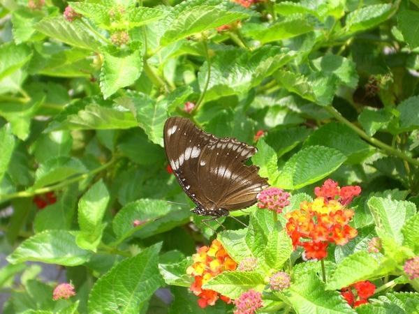 蝴蝶的殘缺美