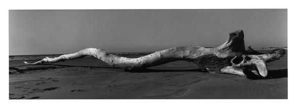 Josef_Koudelka_Camargue_Bouches-du-Rhone_-_Josef_Koudelka-Magnum_PhotosConservatoire_du_littoral-Tour_du_Valat_basse.jpg