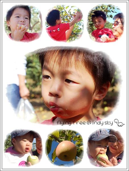 20100906_u-pick01.jpg