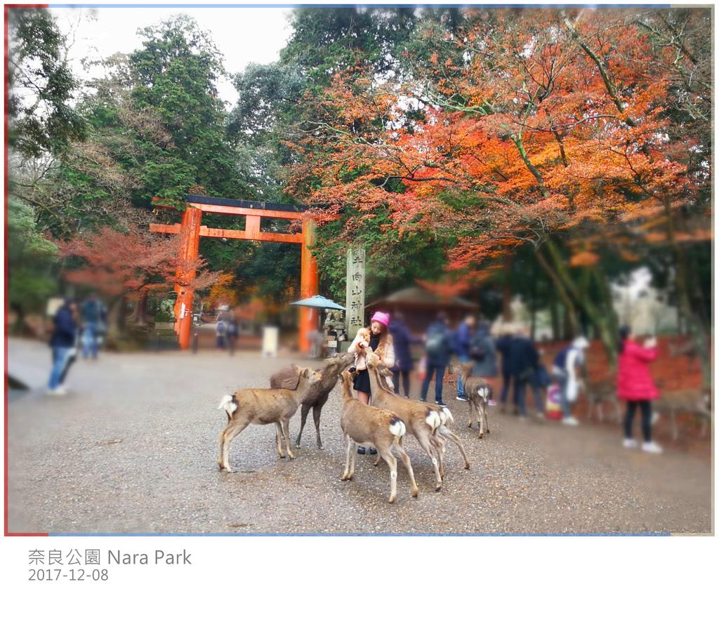 48 奈良公園 (365).jpg