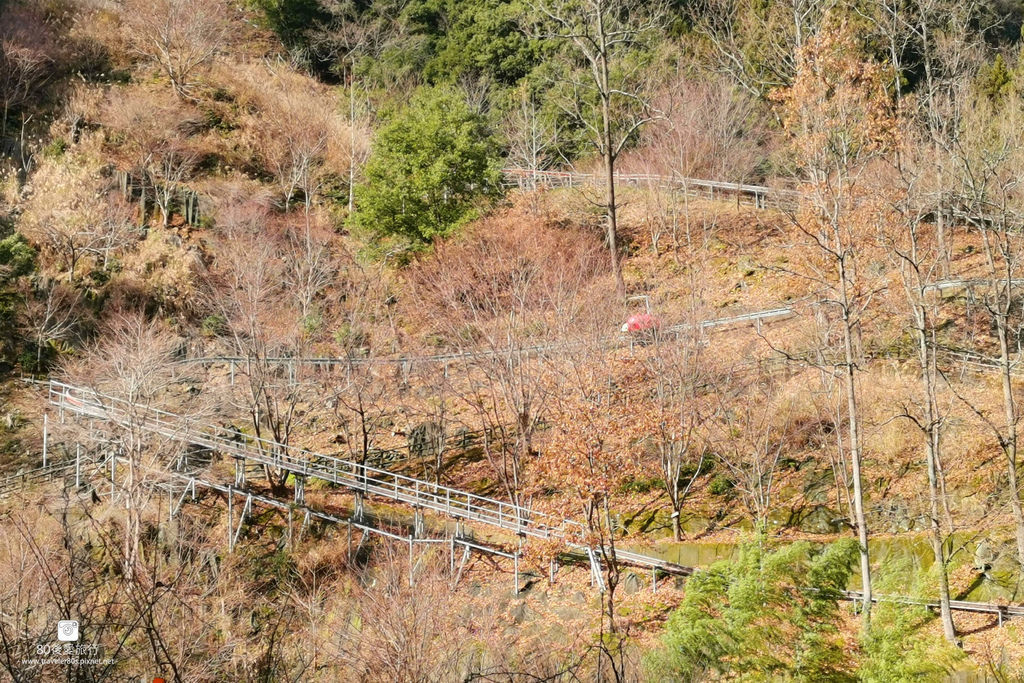 35 forest adventure (1)_MFW.jpg