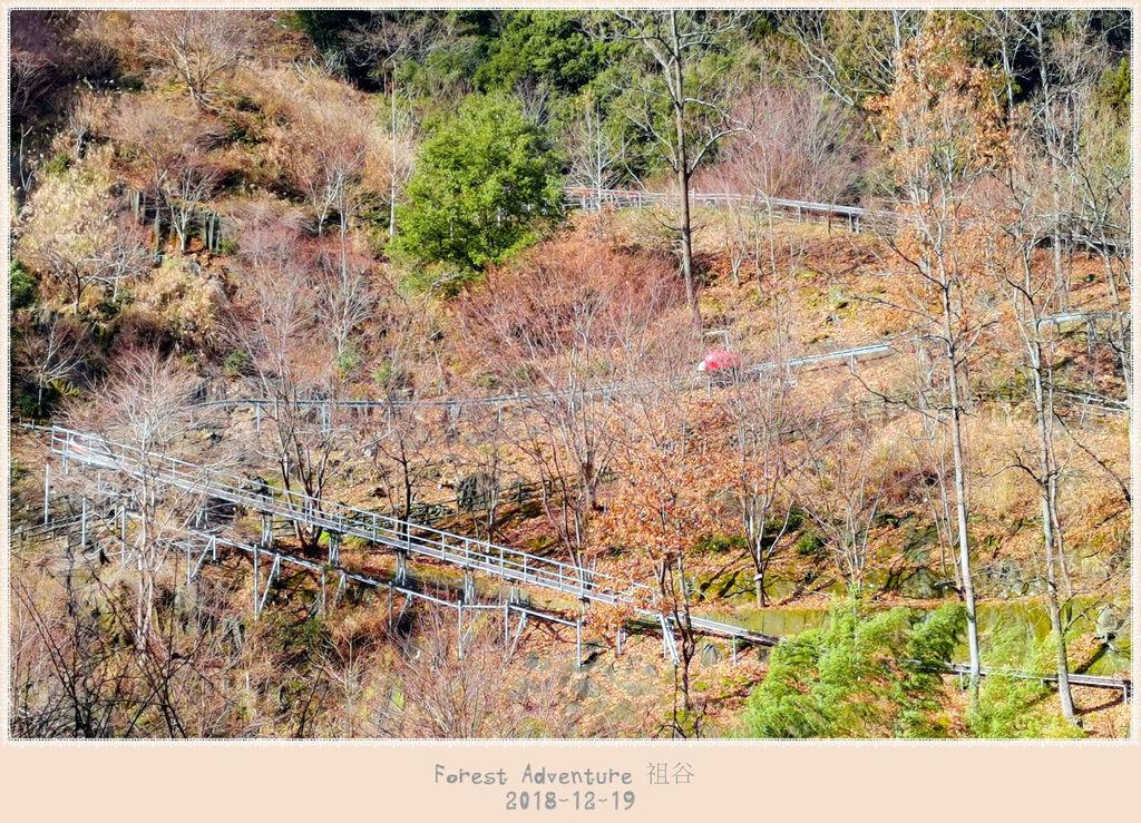 35 forest adventure.jpg