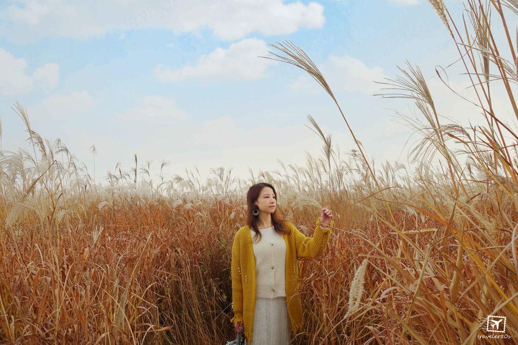 19 天空公園_芒草 (81)_MFW.jpg