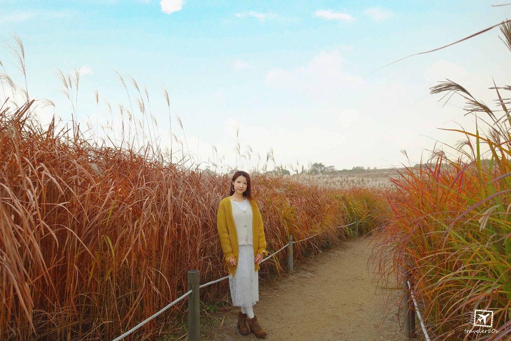 19 天空公園_芒草 (129)_MFW.jpg