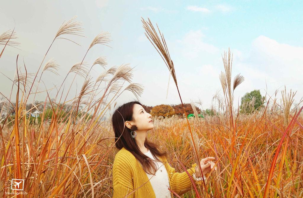 19 天空公園_芒草 (164)_MFW.jpg